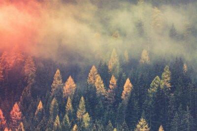 Fototapeta autumn nature background forest in fog