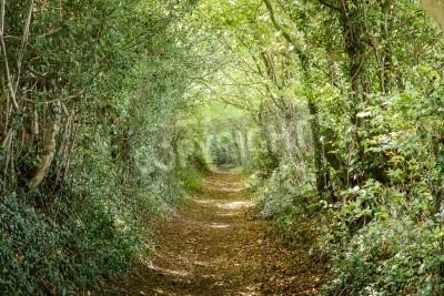 Fototapeta Avenue of trees in the Britsh countryside