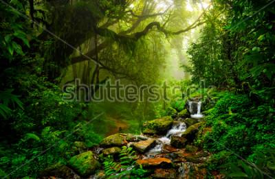 Fototapeta Azjatycki tropikalny las deszczowy