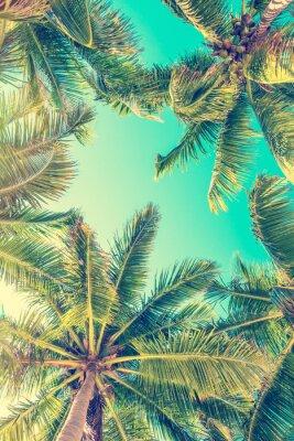 Fototapeta B ?? kitne niebo i palmy widok z do? U