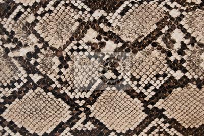 Fototapeta background of snake skin texture