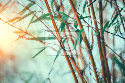 Bamboo forest closeup. Growing bamboos border design over blurred sunny background. Gardening