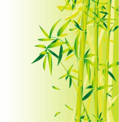 Fototapeta Bamboo Green