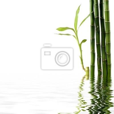Bamboo łodygi i liście border