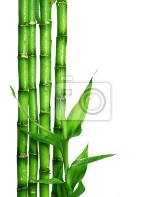 Bamboo na białym