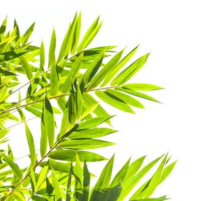Fototapeta Bamboo pozostawia na białym tle