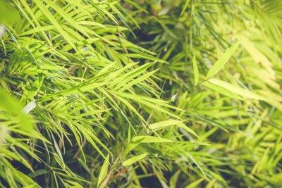 Fototapeta Bamboo pozostawia w lasach deszczowych