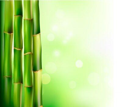 Fototapeta Bamboo tle. Ilustracji wektorowych.