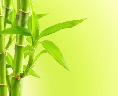 Fototapeta Bamboo tle z kopi?
