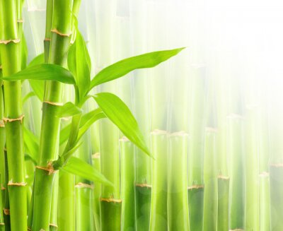 Fototapeta Bamboo tle z miejsca kopiowania