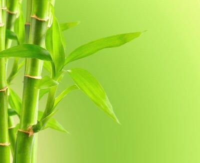 Fototapeta Bamboo tle z miejsca na kopię