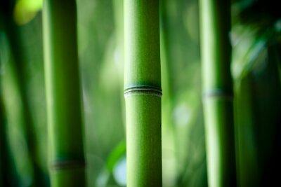 Fototapeta Bambou zen