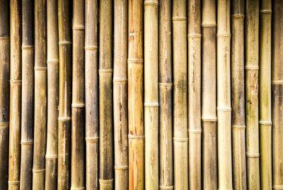 Fototapeta bambus