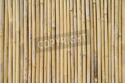 Fototapeta Bambus ogrodzenia