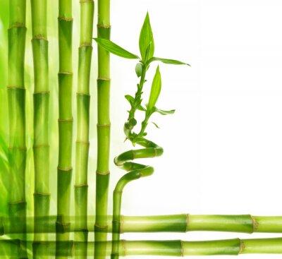 Fototapeta Bambus ramki