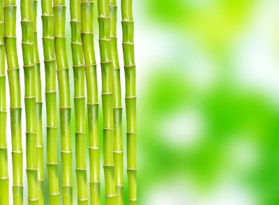 Fototapeta bambus w tle