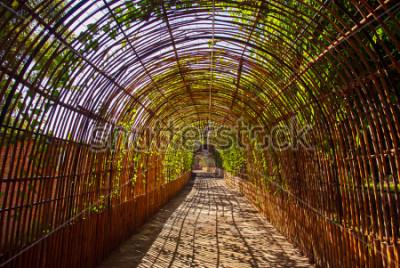 Fototapeta Bambusa krzywa drewniany tunel w parku