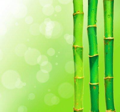 Fototapeta Bambusowe kije przeciwko blured tle z bokeh