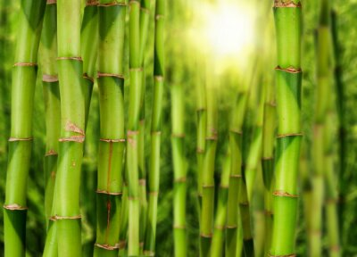 Fototapeta bambuswald