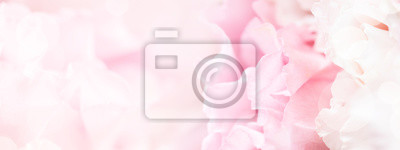 Fototapeta Banner for website with closeup view of pink eustoma flower. Soft pastel wedding background.