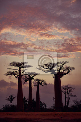 Baobabs Avenue, Morondava, Madagaskar