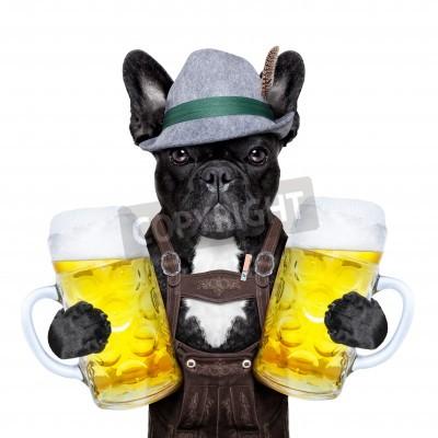 Fototapeta bavarian german dog  holding two big beer mugs