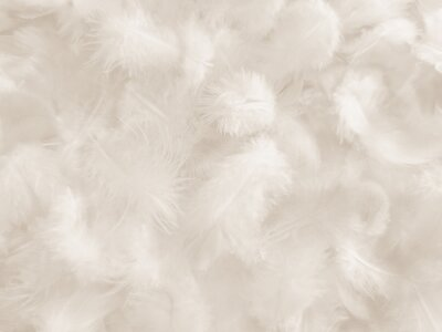 Fototapeta Beautiful abstract gray and white feathers on white background, soft brown feather texture on white pattern background, gray feather background
