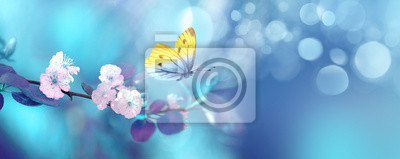 Fototapeta Beautiful blue yellow butterfly in flight and branch of flowering apricot tree in spring at Sunrise on light blue and violet background macro. Elegant artistic image nature. Banner format, copy space.