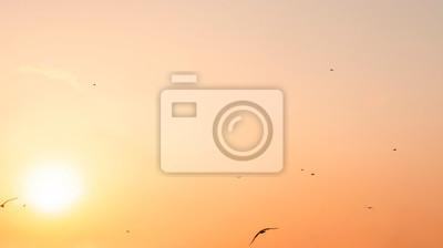 Beautiful clear sunset, bright sun on the orange sky and seagulls.