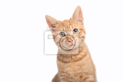 Fototapeta Beautiful cute orange cat