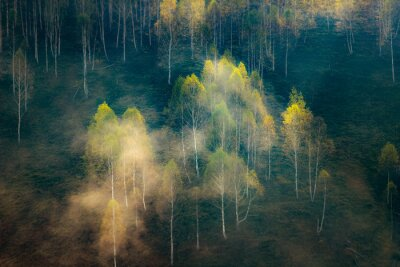 Fototapeta beautiful early autumn nature background foggy trees in the mountains