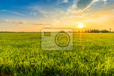 Fototapeta Beautiful environment landscape of green field cornfield or corn in Asia country agriculture harvest with sunset sky background.