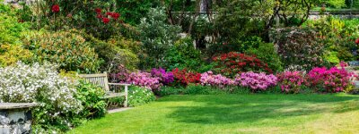 Fototapeta Beautiful Garden with blooming trees during spring time, Wales, , banner size