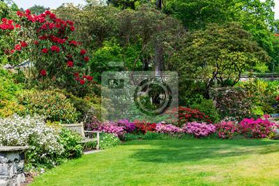 Fototapeta Beautiful Garden with blooming trees during spring time, Wales, UK
