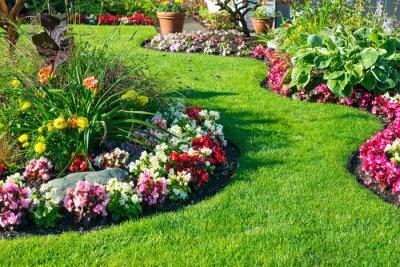 Fototapeta Beautiful home garden in full bloom