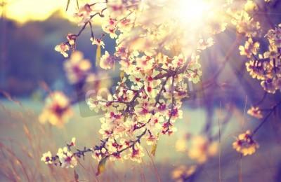 Fototapeta Beautiful nature scene with blooming tree and sun flare