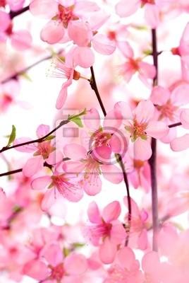 Beautiful Pink Flower Blossom White
