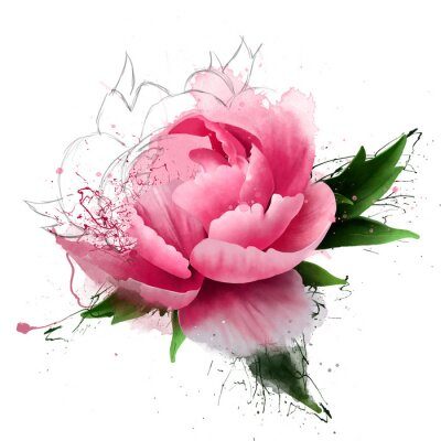 Fototapeta Beautiful pink peony, with sketch elements and paint splashes, close-up on white background. As a logo or creative greeting card