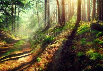 Fototapeta Beautiful scene misty old autumn forest