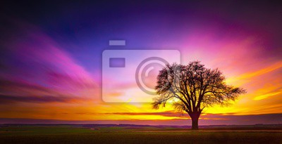 Fototapeta Beautiful tree on a grassy field with the breathtaking colorful sky in the background