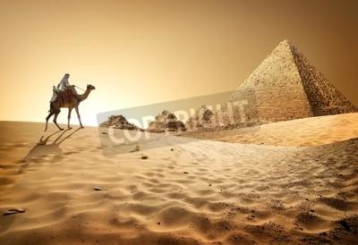 Fototapeta Beduin na wielbłądzie w pobliżu piramid w pustyni