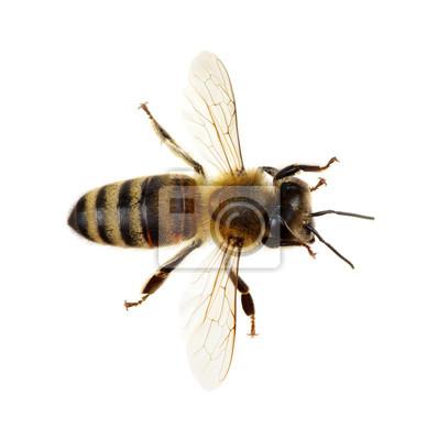 Bee na białym