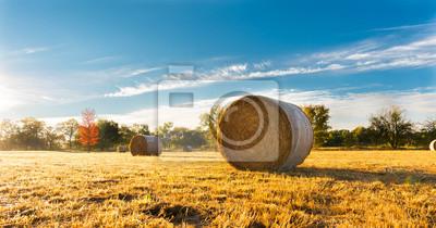 Fototapeta Beli siana w polu gospodarstwa