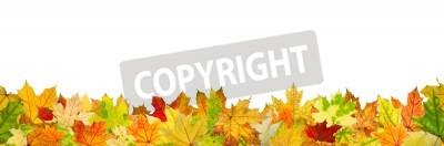 Fototapeta Bez szwu deseń liści jesienią, leżącego na ziemi.