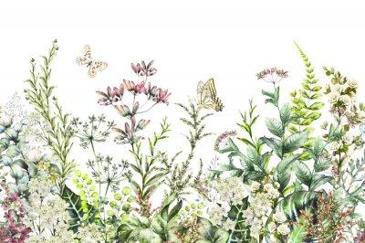 Fototapeta Bez szwu. Granica z ziołami i dzikimi kwiatami, liśćmi. Ilustracji wektorowych Kolorowe ilustracji na białym tle. Wiosenna kompozycja z motylem