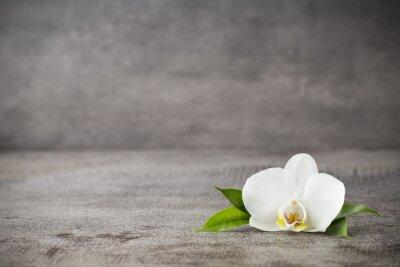 Fototapeta Biała orchidea i spa kamienie na szarym tle.