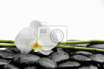 Biała orchidea z czarnymi kamieniami, gaj na mokrych tle