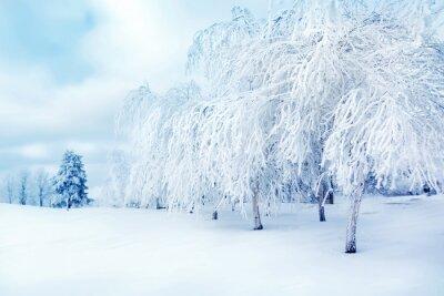Fototapeta Białe drzewa w śniegu w parku miejskim. Piękna krajobraz zimowy.
