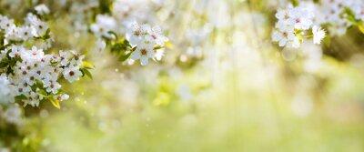 Fototapeta Białe kwiaty na wiosnę niedziela