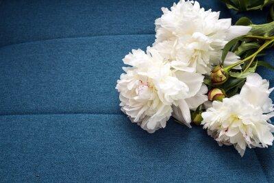Fototapeta Białe piwonie na niebieskim tle tkaniny.